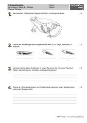 ▷ Schulaufgaben Biologie Klasse 6 Gymnasium   Catlux