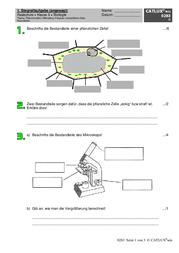schulaufgaben biologie klasse 6 realschule catlux. Black Bedroom Furniture Sets. Home Design Ideas
